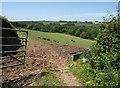 SS9120 : Bull in field, Hangman's Hill by Derek Harper