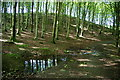 NY1532 : Track through Setmurthy Plantation by Bill Boaden