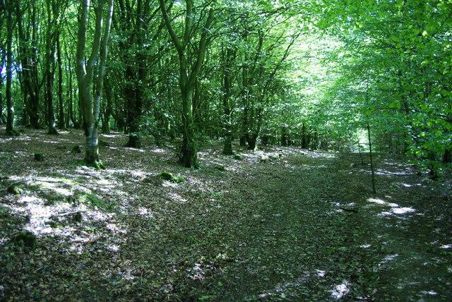 The Allerdale Ramble through Setmurthy Plantation
