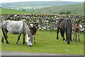 SX5276 : Mares and foals by Graham Horn