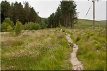 SD6715 : A footpath to Winter Hill by Ian Greig