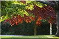 TQ3089 : Evening sun through trees, Priory Park by Julian Osley