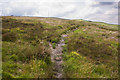 SD6913 : A path on Horrocks Moor by Ian Greig