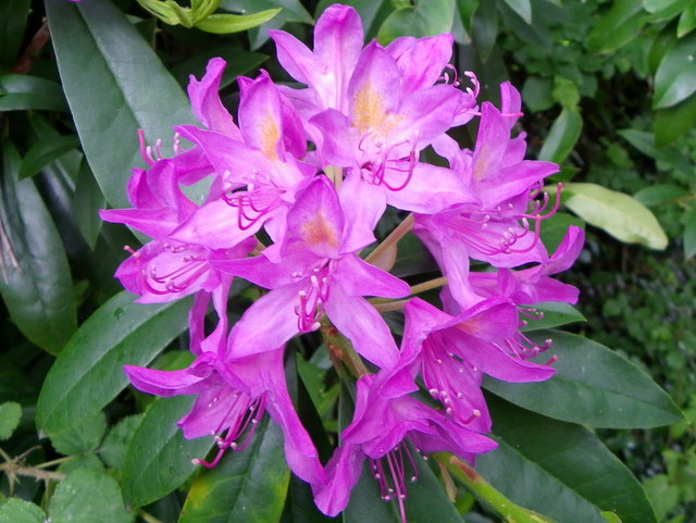 Rhododendron, All Saints' Church