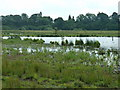 TQ0215 : Waltham Brooks Nature Reserve by Dave Spicer