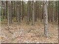 NS9488 : Woodland by the Moor Loch by Richard Webb