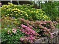 NG8681 : Azaleas and a bluebell, Inverewe Garden by Robin Drayton