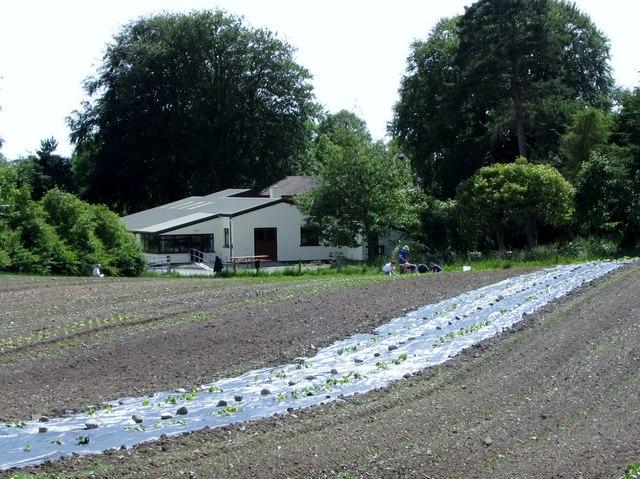 Market gardening at the Camphill Community Mourne Grange