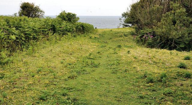 Vegetation, Lighthouse Island