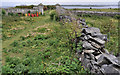 J5985 : Drystone wall, Lighthouse Island (1) by Albert Bridge