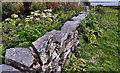 J5985 : Drystone wall, Lighthouse Island (2) by Albert Bridge