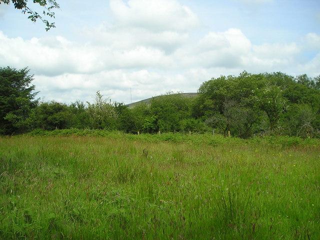 Rushy field
