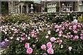 SH7972 : The Upper Rose Terrace at Bodnant Garden by Jeff Buck