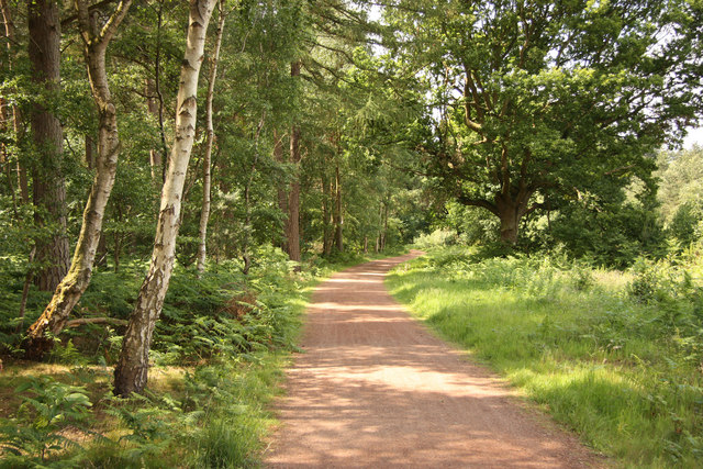 Dukeries Trail