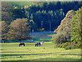 NS2173 : Horses at Bridgend by Thomas Nugent
