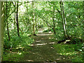 TQ3964 : Path in Well Wood by Robin Webster