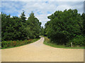 SU8042 : Forest Track by Sandy B