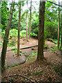 SU8142 : Walking through the forest by Sandy B