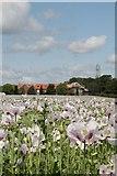 SU5985 : Pink Poppies by Bill Nicholls