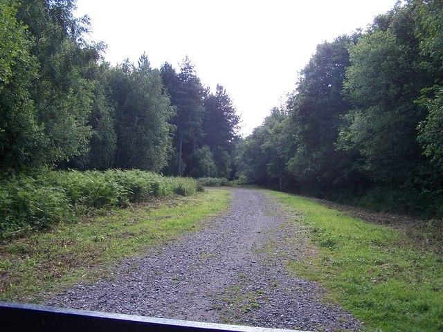Footpath into Arley Wood