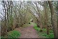 TQ1433 : West Sussex Literary Trail, Horsham Corner Wood by N Chadwick