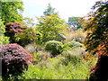 SX4968 : The Garden House garden in June - 20 by Jonathan Billinger