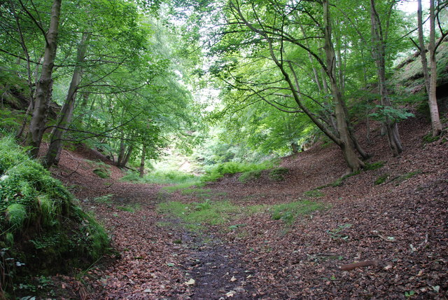 Valley in the Trees, Wolseley Bridge