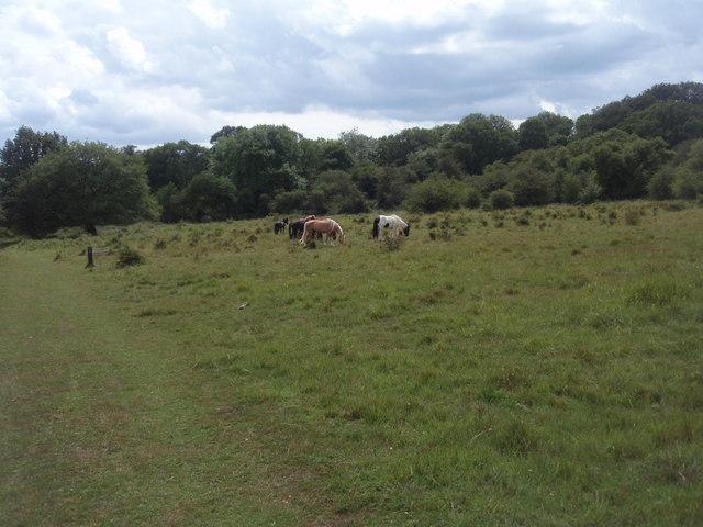 Castor Hanglands nature reserve
