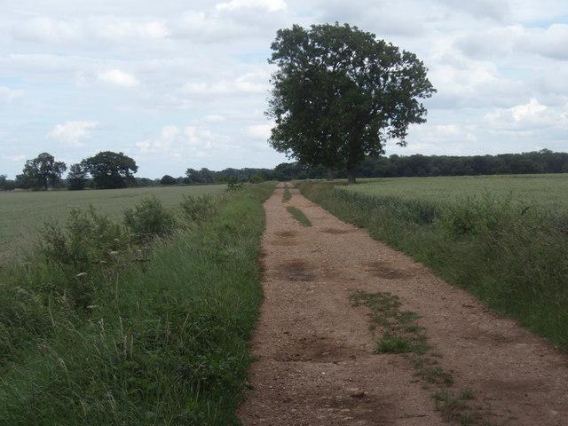 Farm track near Bushy Wood