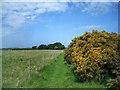 SU6490 : Footpath with  Gorse Bush by Des Blenkinsopp
