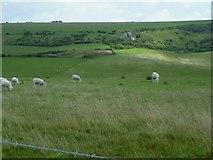 TQ2010 : Sheep grazing on Windmill Hill by Shazz