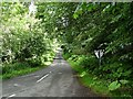 NU2004 : Leafy lane at Guyzance by Oliver Dixon