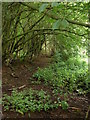 SO4408 : Footpath through the wood by Ian Paterson