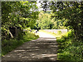 NZ1859 : Derwent Walk, Nine Arches by David Dixon