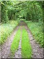 SU6035 : Oxdrove Way Near Scrivens Copse by Colin Smith