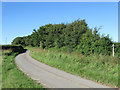 TQ5408 : Sessingham Lane by Simon Carey