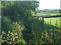 SP9916 : Overgrown Icknield Way by Tom Presland