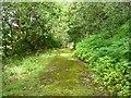 SE0125 : Track in Hathershelf Scout Wood, Mytholmroyd by Humphrey Bolton