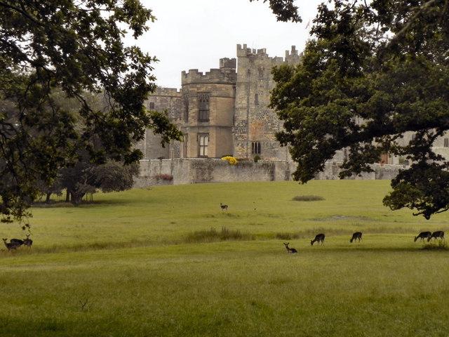Deer Grazing on Raby Castle Estate