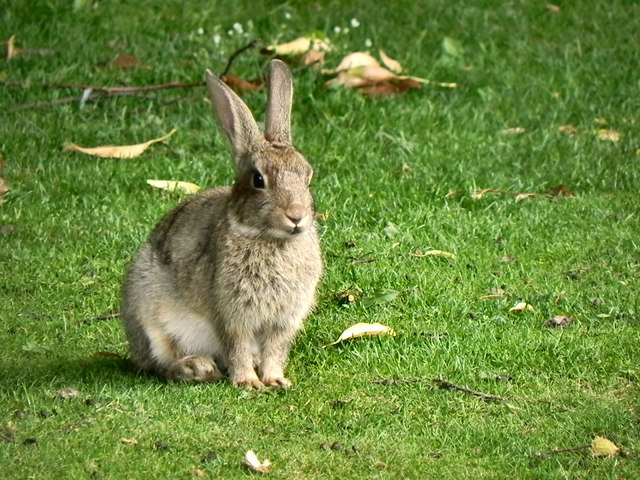 Rabbit in the Sensory Garden