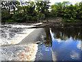 NZ0416 : River Tees by David Dixon