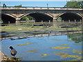 TQ2680 : Serpentine bridge by Oast House Archive