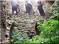 NT7323 : Inside Cessford Castle (1) by Astrid H