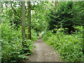 TQ3865 : Path in Spring Park woodland by Robin Webster