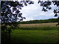 TM3872 : Footpath to Sibton Green by Adrian Cable