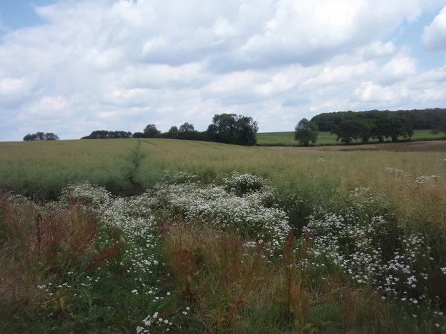 Footpath to Bowthorpe Park Farm