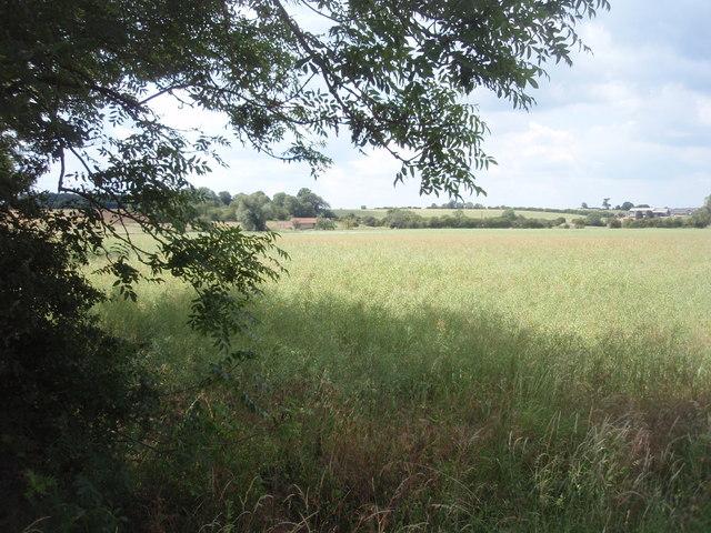Farmland near Manthorpe