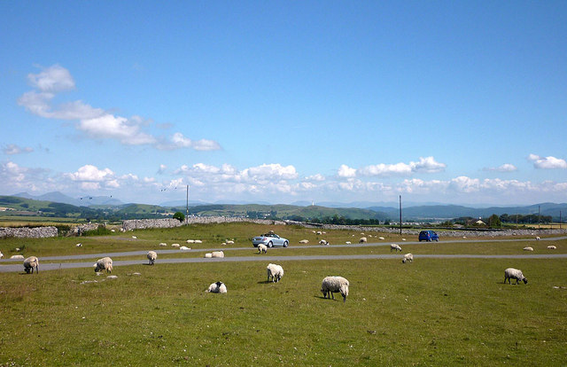 Sheep and cars, Birkrigg Common