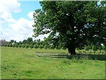 SE5158 : Beningbrough Park by JThomas