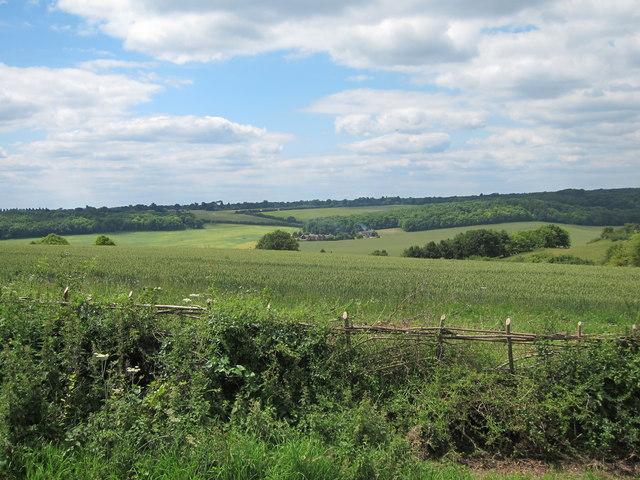 Wheat field off Common Road